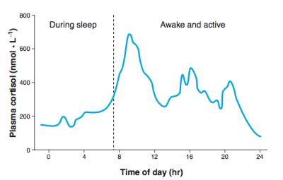 ritmo cortisol